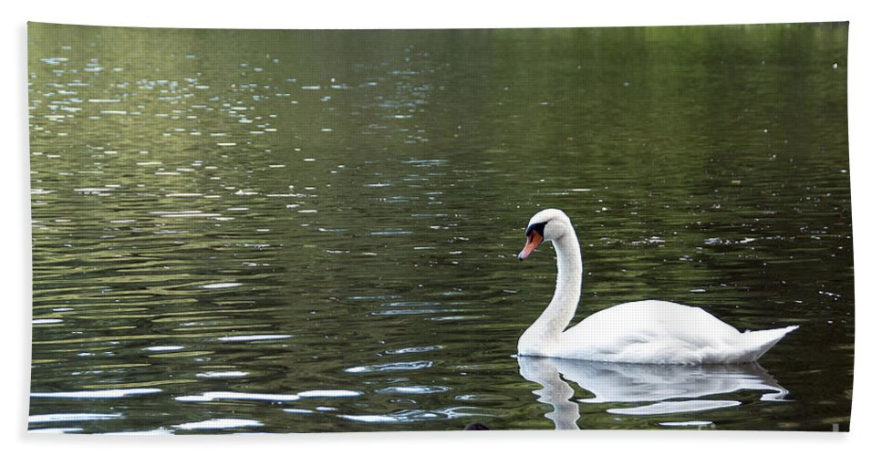 Swan Photo Hand Towel featuring the photograph The White Swan by Ivy Ho