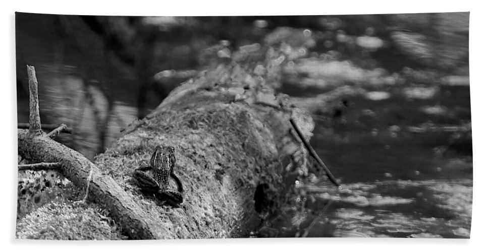 Usa Hand Towel featuring the photograph There Is A Frog On The Log by LeeAnn McLaneGoetz McLaneGoetzStudioLLCcom