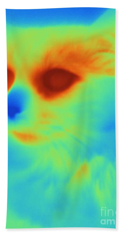 Thermogram Hand Towel featuring the photograph Thermogram Of A Cat by Ted Kinsman