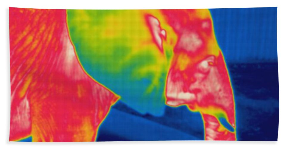 Thermogram Hand Towel featuring the photograph Thermogram Of An Elephant by Ted Kinsman