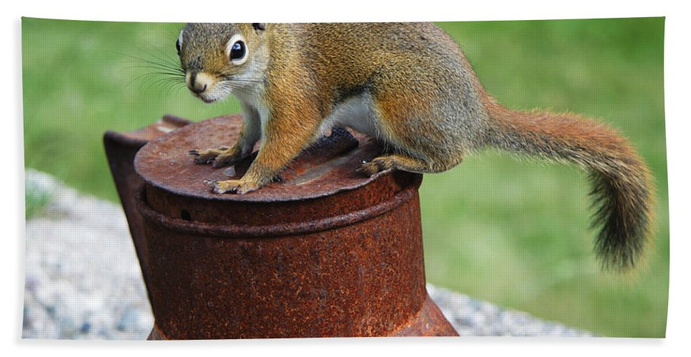 Squirrel Bath Sheet featuring the photograph They Call Me Rusty by Jeff Galbraith