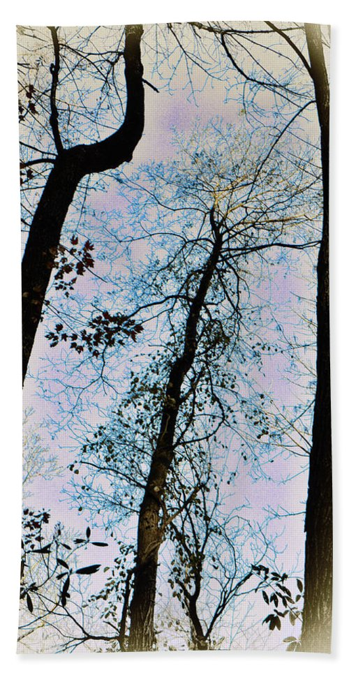 Trees Bath Sheet featuring the photograph Things Are Looking Up by Bill Cannon