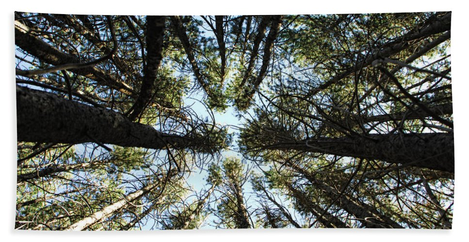 Trees Hand Towel featuring the photograph Things Are Looking Up by Donna Blackhall