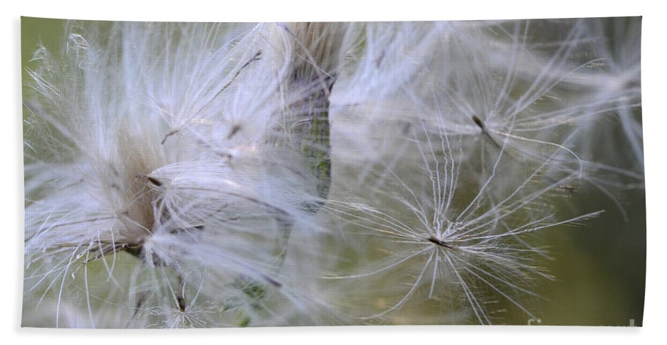 Thistle Seeds Hand Towel featuring the photograph Thistle Seeds by Bob Christopher