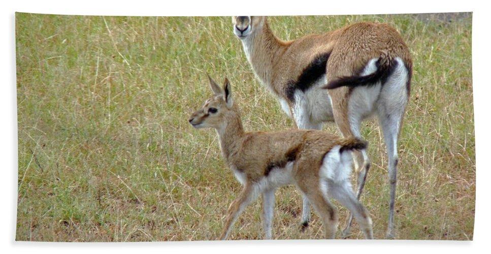 Gazelle Bath Sheet featuring the photograph Thomsons Gazelle by Tony Murtagh