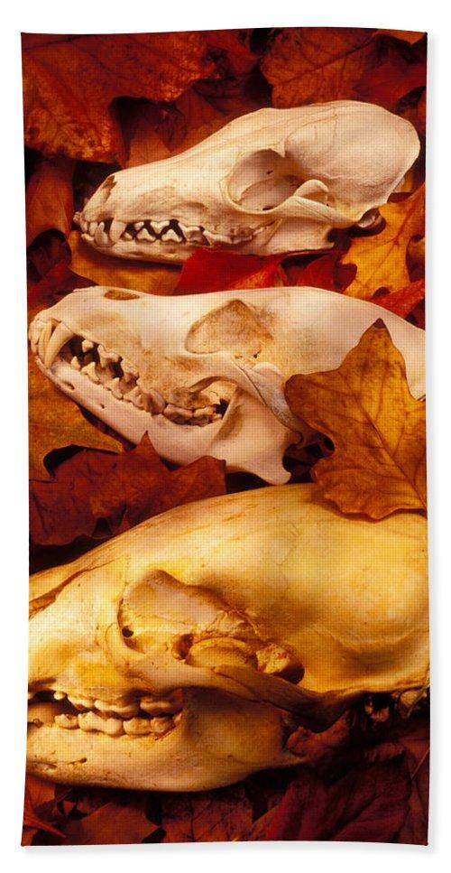 Three Animal Skulls Bath Sheet featuring the glass art Three Animal Skulls by Garry Gay