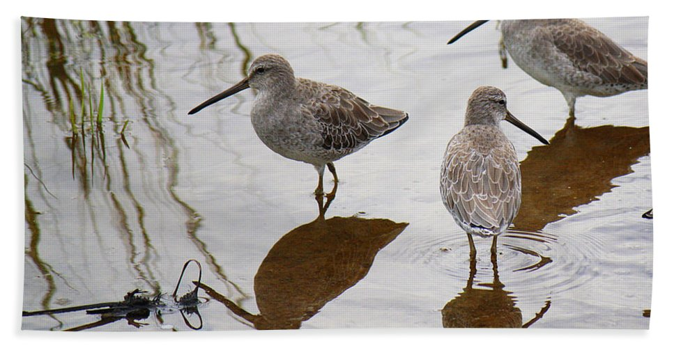 Roena King Hand Towel featuring the photograph Three Long Billed Dowitchers by Roena King