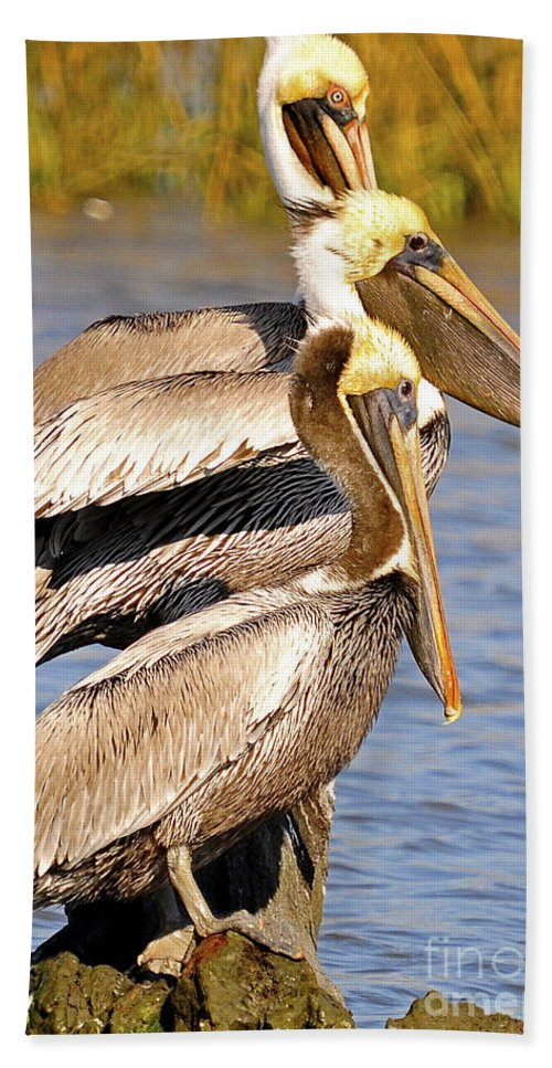 Pelican Bath Sheet featuring the photograph Three Pelicans On A Stump by TJ Baccari