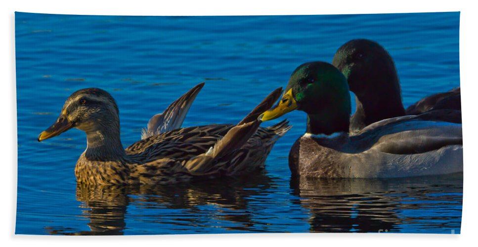 Mallards Hand Towel featuring the photograph Three's Company by Scott Hervieux