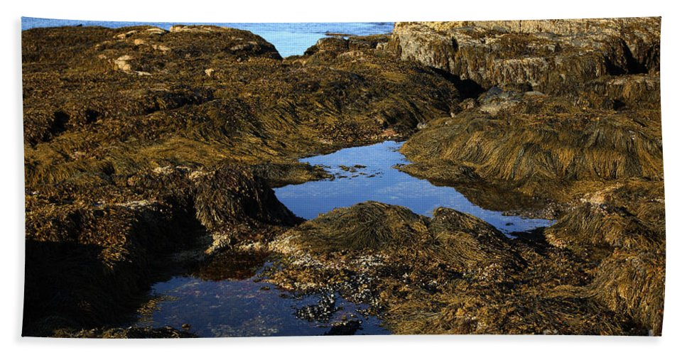 Tide Hand Towel featuring the photograph Tidepool In Maine by Ted Kinsman