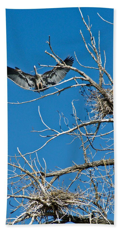 Bird Bath Sheet featuring the photograph Time To Nest by Colleen Coccia
