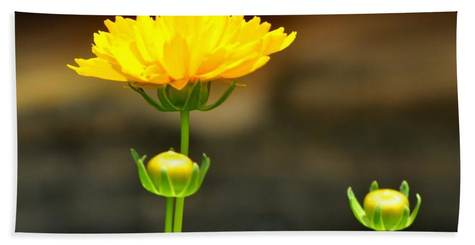 Flower Bath Sheet featuring the photograph Times Three by Maria Urso