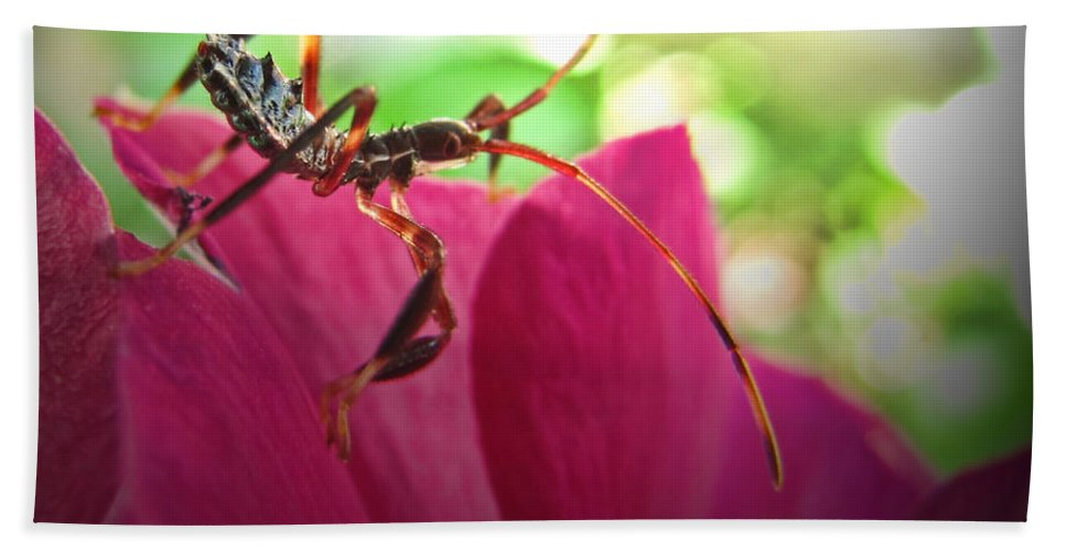 Bath Sheet featuring the photograph Tiny Leaf Hopper by Debbie Portwood