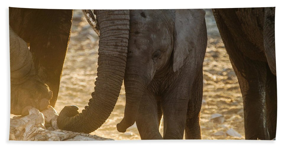 Action Hand Towel featuring the photograph Tiny Trunk by Alistair Lyne