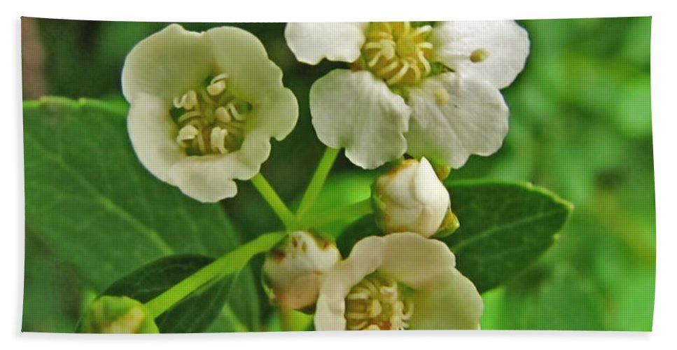 Bath Sheet featuring the photograph Tiny White Flowers Of A Bush by Debbie Portwood
