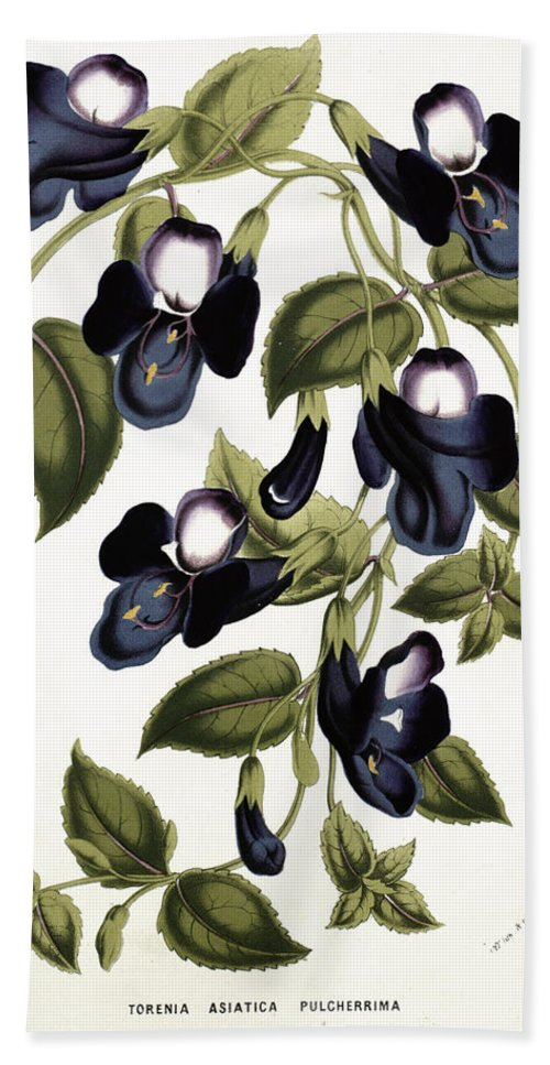 Flower Bath Sheet featuring the painting Torenia Asiatica Pulcherrima by Louis van Houtte