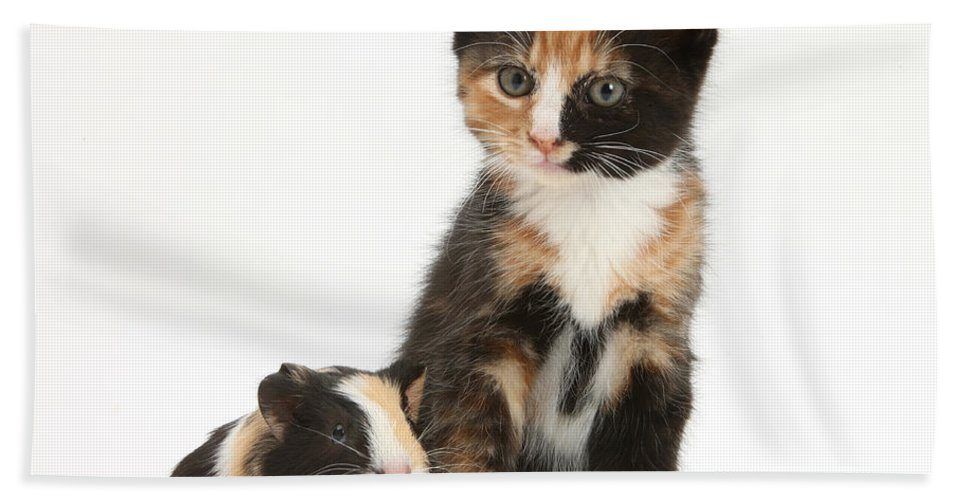 Nature Hand Towel featuring the photograph Tortoiseshell Kitten With Baby by Mark Taylor