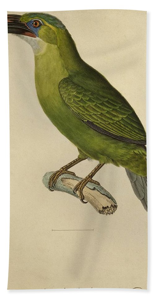 Bird; Profile; Beak; Plumage; Feather; Feathers; Ornithological; Exotic; Ornithology; Illustration; Plate; South America; American; Green; Animal Bath Sheet featuring the painting Toucan by Paul Louis Oudart