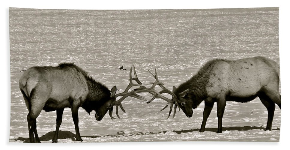 Elk Bath Sheet featuring the photograph Touche by Eric Tressler