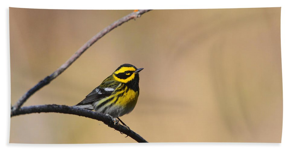 Doug Lloyd Hand Towel featuring the photograph Townsends Warbler by Doug Lloyd