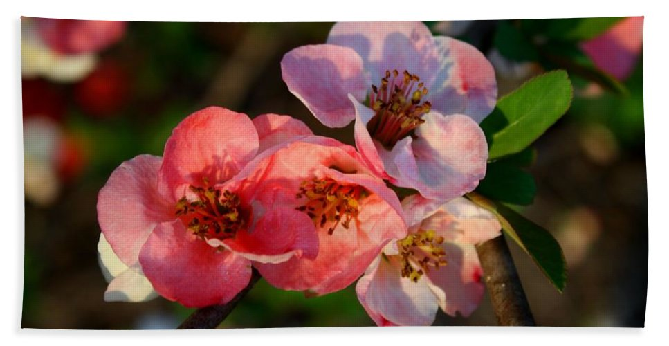 Quince Bath Sheet featuring the photograph Toyo Nishiki Quince by Kathryn Meyer