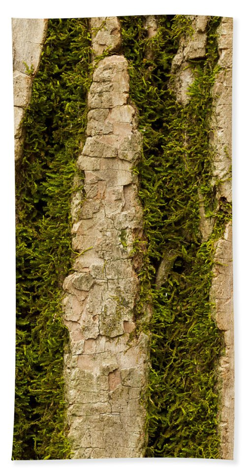Tree Hand Towel featuring the photograph Tree Bark Mossy 4 C by John Brueske