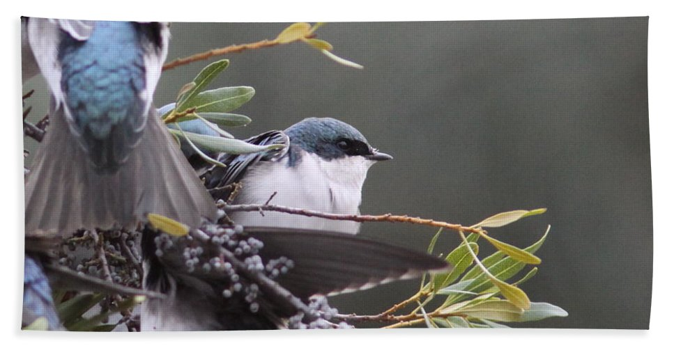 Tree Swallow Bath Sheet featuring the photograph Tree Swallow - Standing Guard by Travis Truelove
