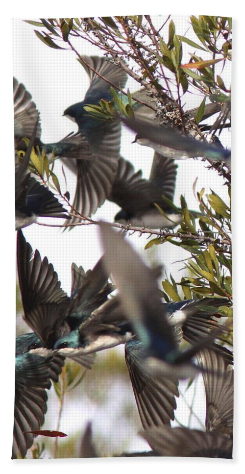 Swallow Bath Sheet featuring the photograph Tree Swallow Frenzy by Travis Truelove