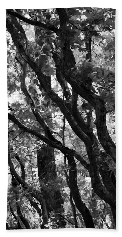 Trees Bath Sheet featuring the photograph Trees Beautiful Trees by Kathy Clark