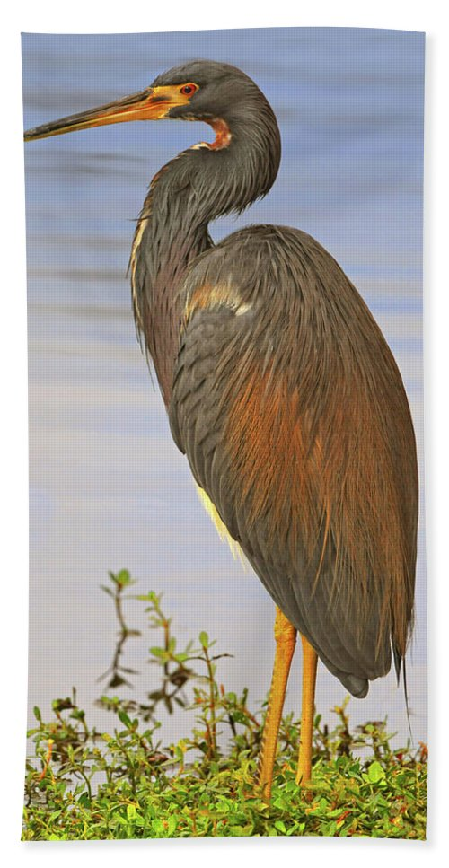 Tricolor Heron Bath Sheet featuring the photograph Tricolor Heron by Dave Mills