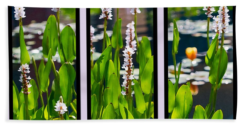Triptych Bath Sheet featuring the photograph Triptych Of Water Hyacinth by Kathy Clark
