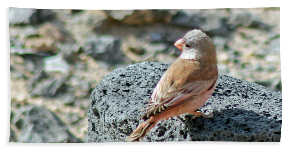Finch Hand Towel featuring the photograph Trumpeter Finch by Tony Murtagh