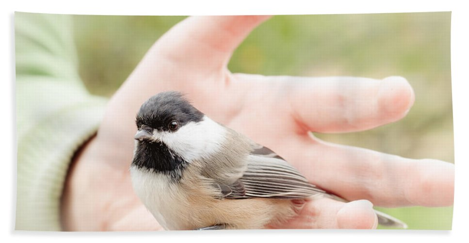 Chickadee Hand Towel featuring the photograph Trust by Cheryl Baxter