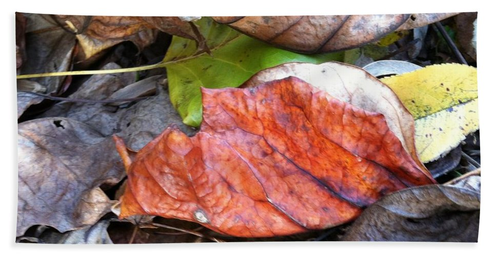 Leaves Bath Sheet featuring the photograph Tucked In For The Season by Trish Hale