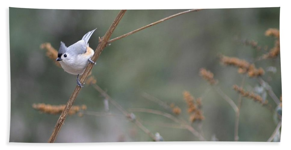 Birds Bath Sheet featuring the photograph Tufted Titmouse 2 by Living Color Photography Lorraine Lynch