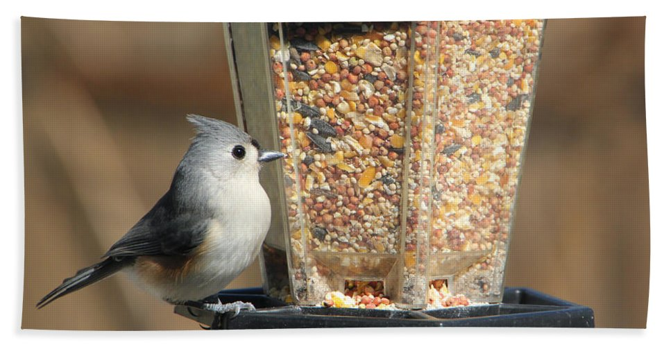 Tn Hand Towel featuring the photograph Tufted Titmouse by Ericamaxine Price