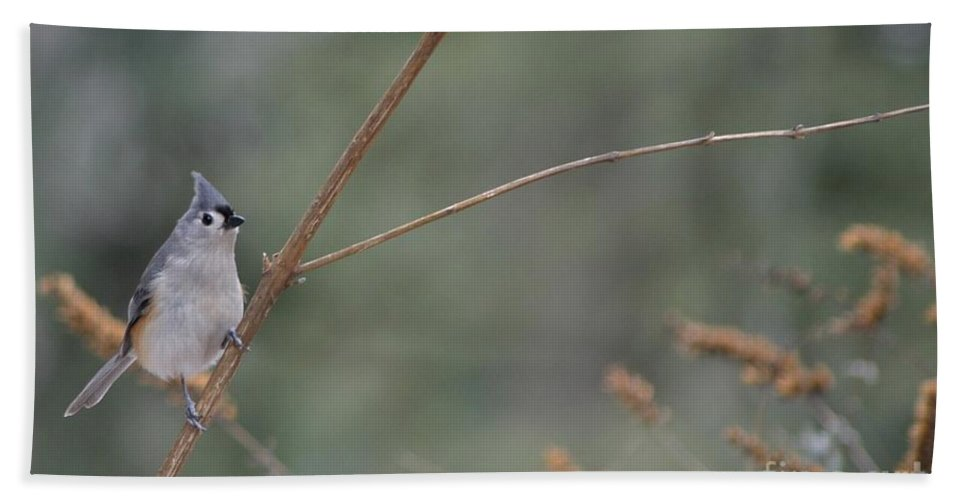 Bird Bath Sheet featuring the photograph Tufted Titmouse by Living Color Photography Lorraine Lynch