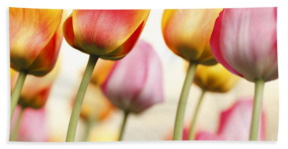 Tulip Bath Sheet featuring the photograph Tulip - Impressions 1 by Martin Williams