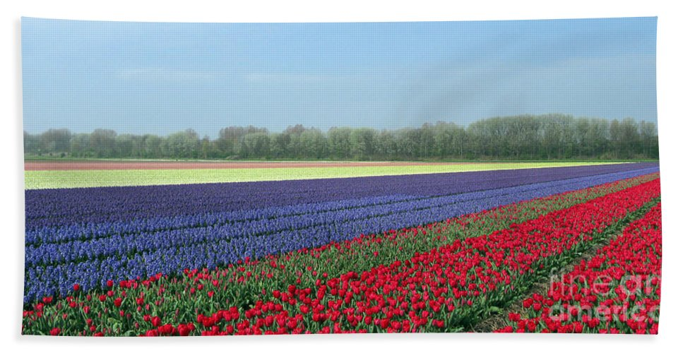 Tulip Fields Bath Sheet featuring the photograph Tulip And Hyacinth Fields In Holland. Panorama by Ausra Huntington nee Paulauskaite