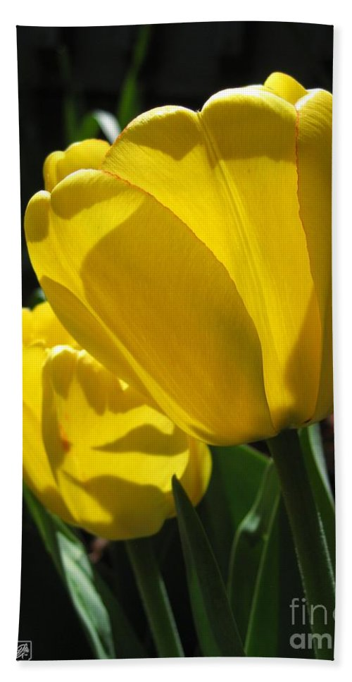 Tulip Hand Towel featuring the photograph Tulip Named Big Smile by J McCombie