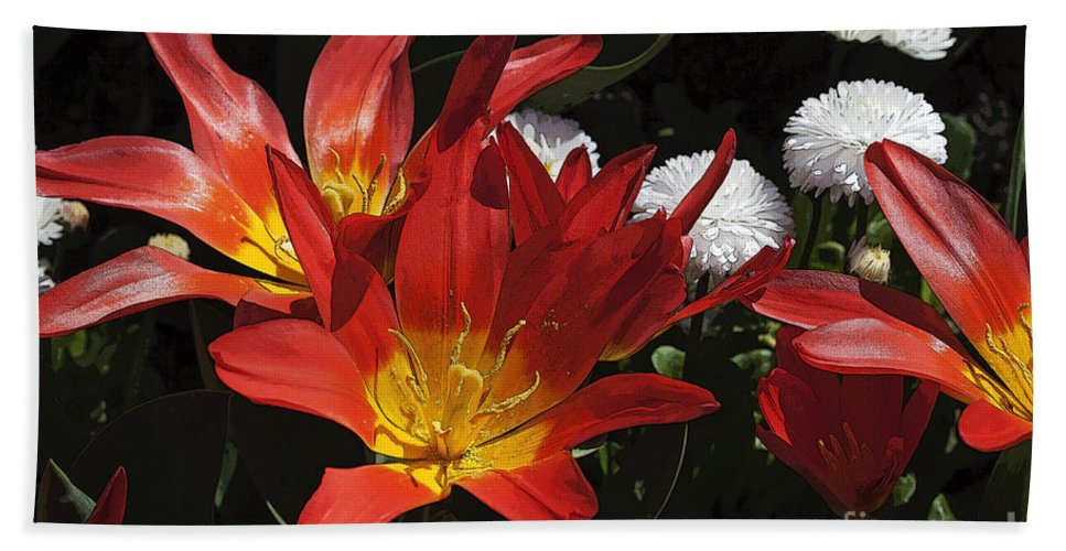 Tulips Hand Towel featuring the photograph Tulips And Daisies by Louise Heusinkveld