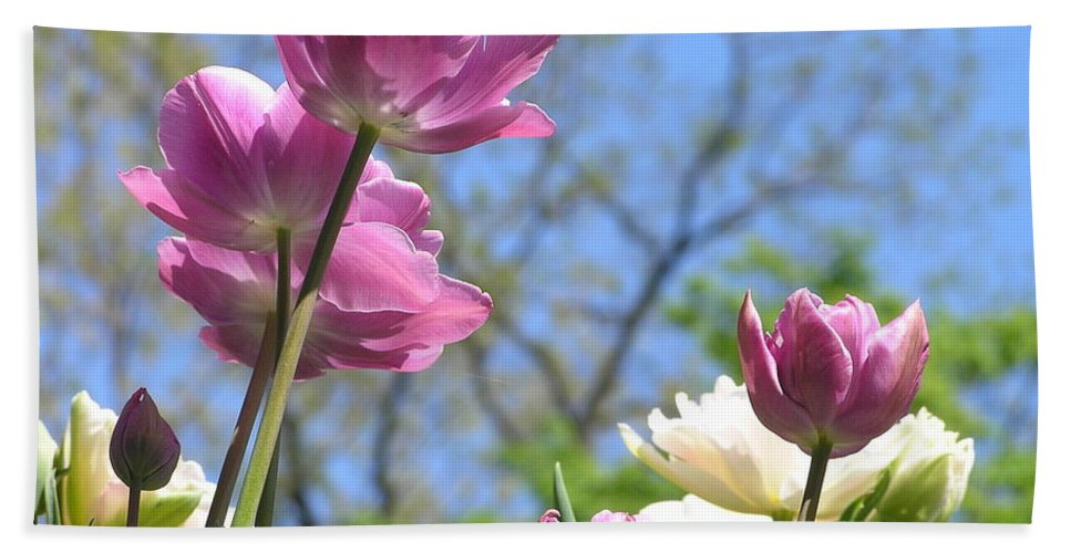 Violet Bath Sheet featuring the photograph Tulips In The Sun by Stefa Charczenko