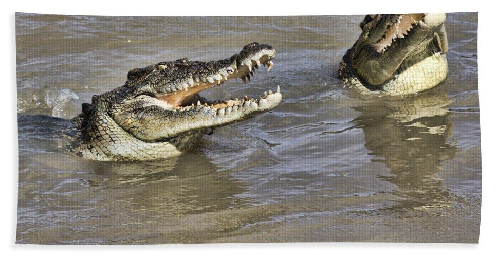 Crocodiles Hand Towel featuring the photograph Turf Wars by Douglas Barnard