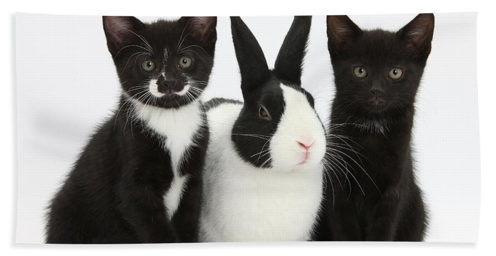 Nature Hand Towel featuring the photograph Tuxedo Kittens With Dutch Rabbit by Mark Taylor