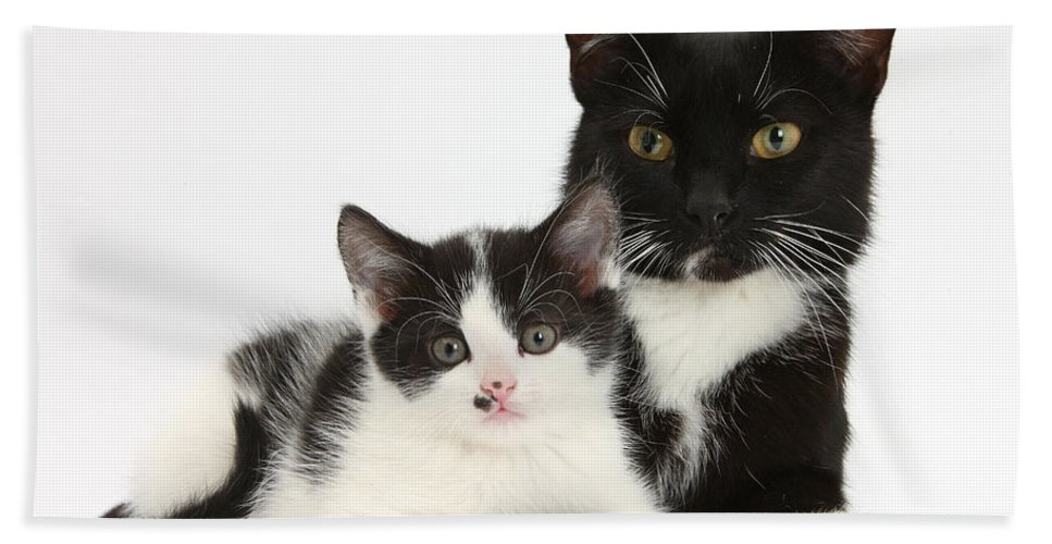 Animal Hand Towel featuring the photograph Tuxedo Mother Cat And Kitten by Mark Taylor