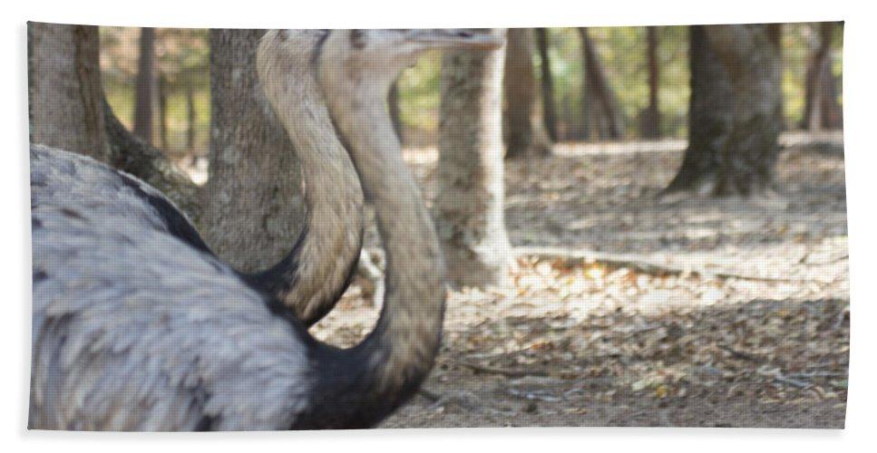 Rheas Hand Towel featuring the photograph Twins by Douglas Barnard