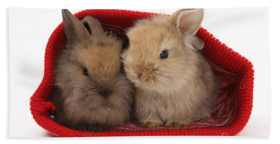 Nature Hand Towel featuring the photograph Two Baby Lionhead-cross Rabbits by Mark Taylor