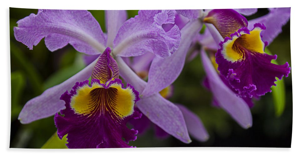 Two Pink Purple Bath Sheet featuring the photograph Two Pink Purple Orchids by Garry Gay