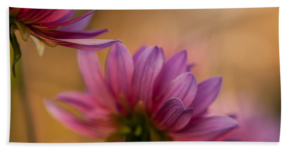 Dahlia Bath Sheet featuring the photograph Two Towards The Light by Mike Reid