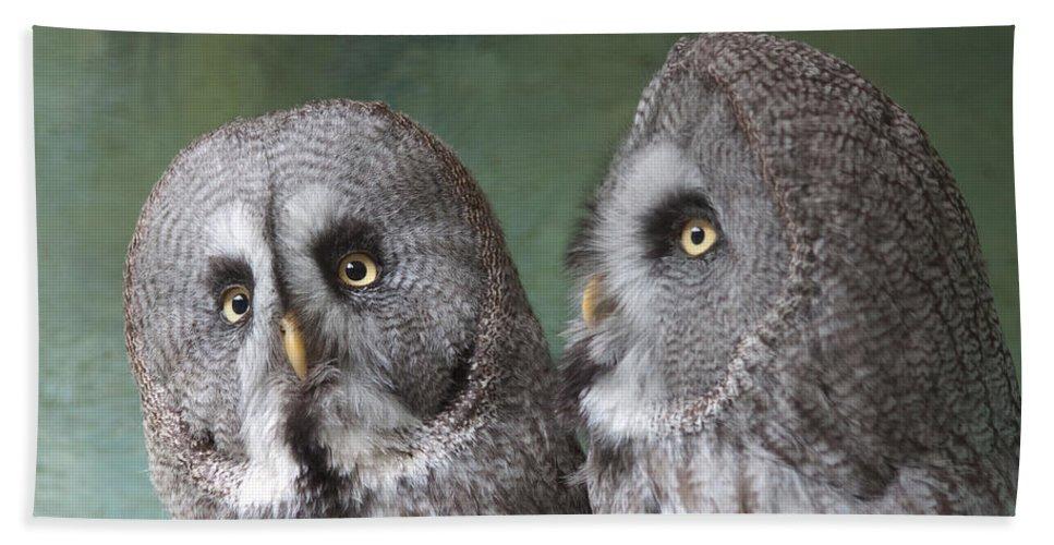 Owls Bath Sheet featuring the photograph U Twit T Who by Dawn OConnor